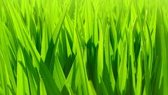 Stock Photo of fresh green leaves background