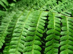 Green fern leafs background Stock Photos