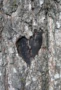 Love symbol on a trunk of tree Stock Photos