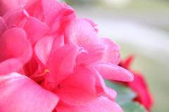 Soft Flower Stock Photos