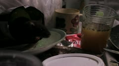 Dirty Rat in a Dirty Kitchen - stock footage