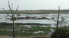 Hippopotamuses in the lake Stock Footage
