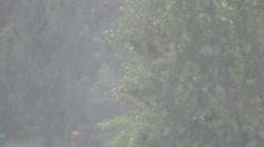 Rain, Storm, Summer Rain, Torrential Rain - stock footage