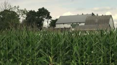 Corn field growing in front of a barn Stock Footage