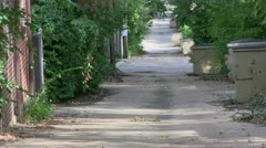 Tree lined street, America, alley Stock Footage
