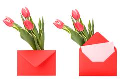 greeting card  with pink tulips  isolated on white background - stock photo