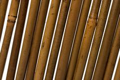 Bamboo stems background Stock Photos