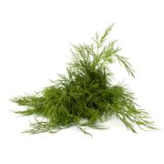 dill close up - stock photo