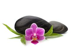 Spa and healthcare concept. orchid and stones. Stock Photos
