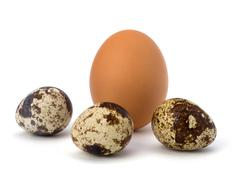 Stock Photo of quail and hen's eggs