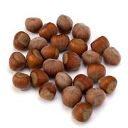 hazelnuts isolated on white background - stock photo