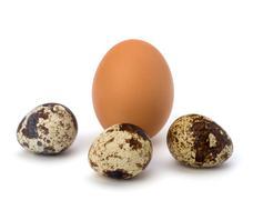 Quail and hen's eggs Stock Photos
