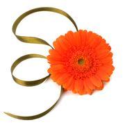 beautiful daisy gerbera flower - stock photo