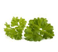 parsley - stock photo