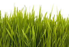 grass silhouette - stock photo