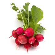 .small garden radish  . Stock Photos