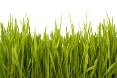 Stock Photo of grass silhouette