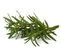Sweet rosemary leaves Stock Photos