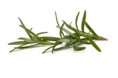 sweet rosemary leaves - stock photo