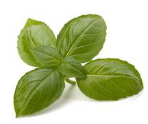 Sweet basil leaves Stock Photos
