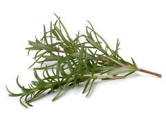 sweet rosemary leaves - stock photo