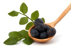 Stock Photo of blue bilberry or whortleberry
