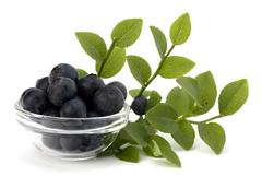 blue bilberry or whortleberry - stock photo
