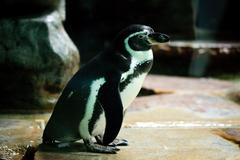 Penguins are standing at the water Stock Photos