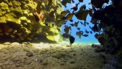 Cave sweeper fish Stock Footage