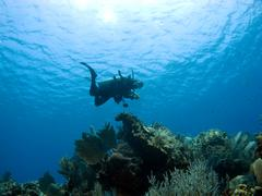 Diver descending on a cayman island reef Stock Photos