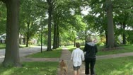 Stock Video Footage of Tree lined street, America