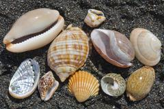 sea and shells - stock photo