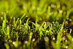 Morning dew on a grass. Stock Photos