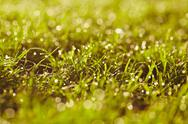 Morning dew on a grass. Stock Photos