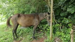 Tamed horse standing Stock Footage