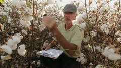 Farming Cotton Stock Footage