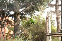 parrot in the aviary - stock photo