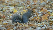 Squirrel in the park Stock Footage