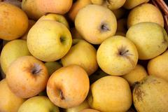 golden apples in a basket - stock photo