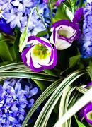 blue fuzzy (hyacinthus orientalis) bouquet - stock photo