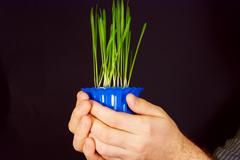 a pot of green shoots in the hands of men - stock photo
