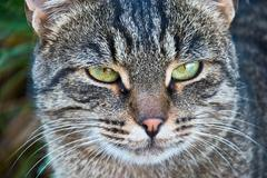 portrait of a beautiful cat in the nature - stock photo