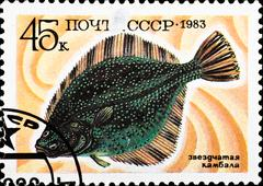 Postage stamp shows starry flounder Stock Photos