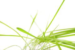 a tuft of grass isolated on white - stock photo