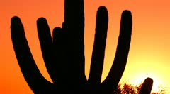 Saguaro Cactus Silhouette Sun Glow Stock Footage
