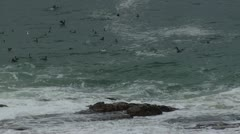 Sea Birds  Stock Footage