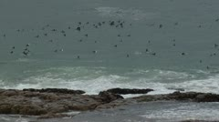 Birds swimming in the sea Stock Footage