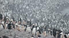 Antarctica, Adelie Penguin Colony LS 2 Stock Footage