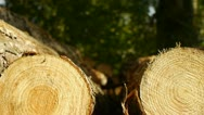 Cut logs, camera move to make copy space. Stock Footage