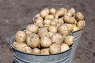 Two buckets with potatoes Stock Photos